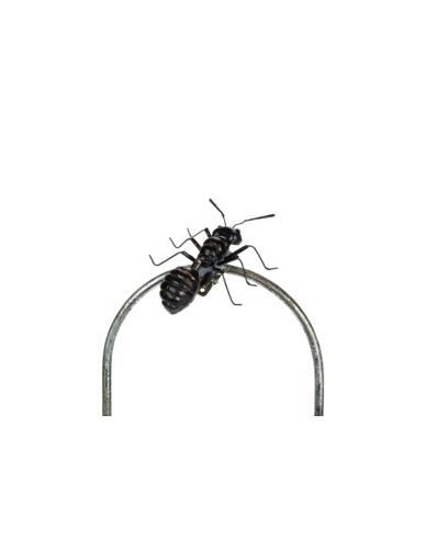 Mrówka Mini klips - Dekoracja