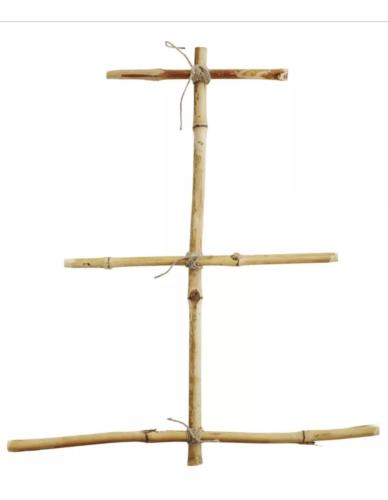 Choinka bambusowa
