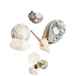 Muszelki morskie mix
